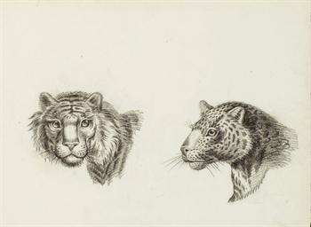 Deux têtes de tigre, l'une de