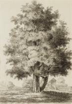 Ensemble de quatre études d'arbres