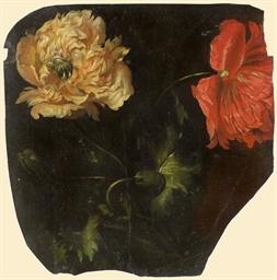 Deux fleurs de pavot, une roug