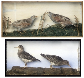 A LATE VICTORIAN TAXIDERMY CAS