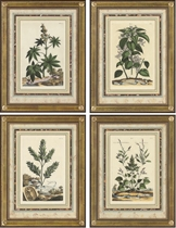 A collection of Eight Botanical studies from Accurate Description of Terrestrial Plants