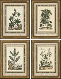 A collection of Eight Botanica