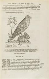 BELON, Pierre (1517?-1564). L'