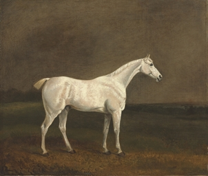 A white stallion in a landscap