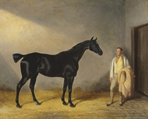A dark bay hunter with a groom in a stable