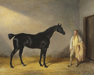 A dark bay hunter with a groom