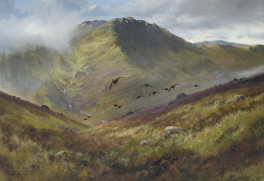 Glen Lochay: Grouse