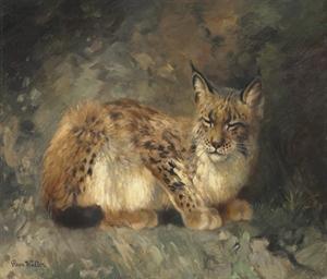 A sleeping lynx