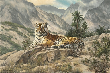 A Caspian tiger lying on a roc