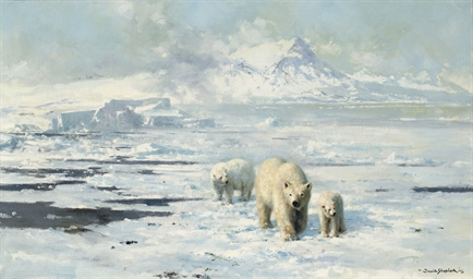 Polar bears in dangerous terri