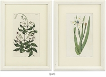 A SET OF FIFTEEN HAND-COLOURED ENGRAVED PRINTS OF BOTANICAL INTEREST