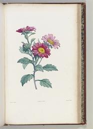 ROUSSEAU, Jean Jacques (1712-1778) Botanique ornie de soixa...