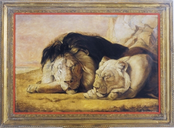 A sleeping lion and his liones