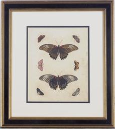 [Butterfly studies]: Nine plat