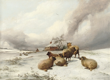 Sheep grazing, mid-winter