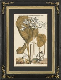 Six Botanical Studies, from Ho