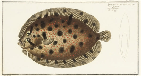 Seven studies of fish