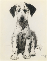 Loopy, the dalmatian puppy