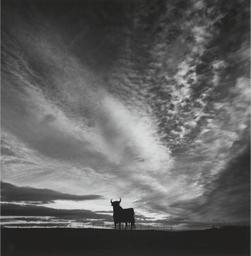 El Toro, Madridejos, La Mancha