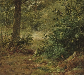 A robin in a woodland landscap