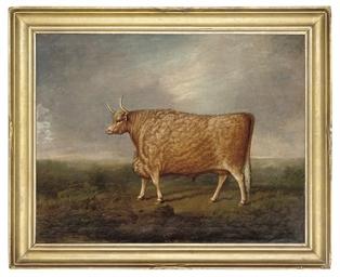 A prize longhorned bull