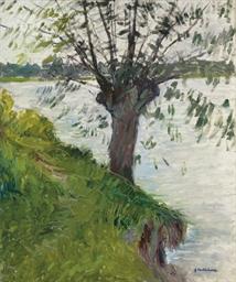 Saule au bord de la rivière