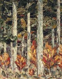 Sonnenbeschienenes Waldstück
