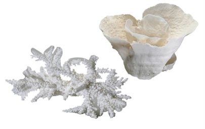 Two pieces of white coral