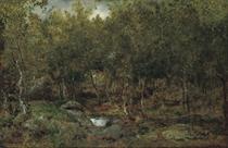 Les vieux bouleaux au plateau de Bellecroix en forêt de Fontainebleau: Birch trees in Fontainebleau forest