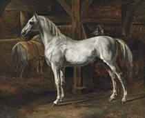 Cheval blanc debout dans une écurie (Tamerlan, étalon des écuries de Versailles): White horse standing in a stable (Tamerlan, stallion of the Versailles stables)