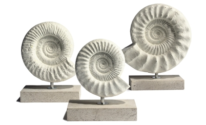 THREE MADAGASCAN AMMONITES