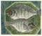 St Peter's Fish