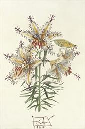 Lilium auratium fornicans