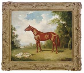A chestnut horse in a landscap
