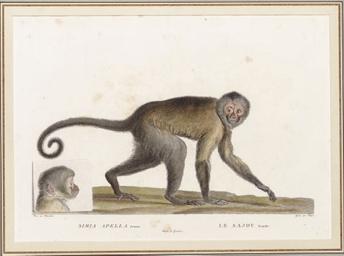 [Exotic Animals]: Six Plates
