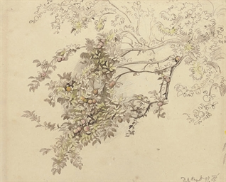 A study of branches on an appl