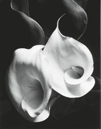 Two Callas, c. 1929