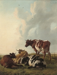 Cattle resting in a meadow
