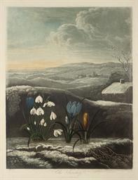 The Snowdrop