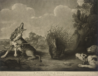 A Porcupine & Dogs