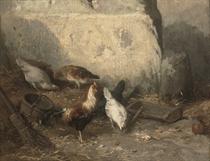Coqs et poulets