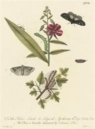 Twelve studies of Moths and Ca