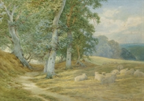 Herding sheep along a Surrey lane in autumn; and Sheep resting by a woodland path (illustrated)