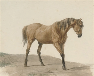 Study of a dunn coloured horse