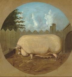 A prized sow
