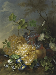 Grapes and morning glory