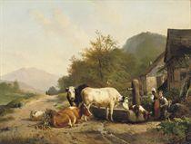 Cattle near a farm