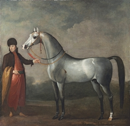 An Arab stallion held by a gro