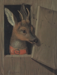 A deer looking out of a stable
