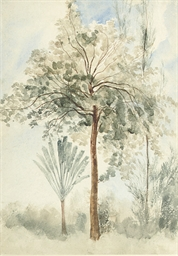 The Teak Tree and a Travellers